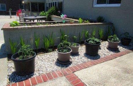 herb & vegetable garden - 6
