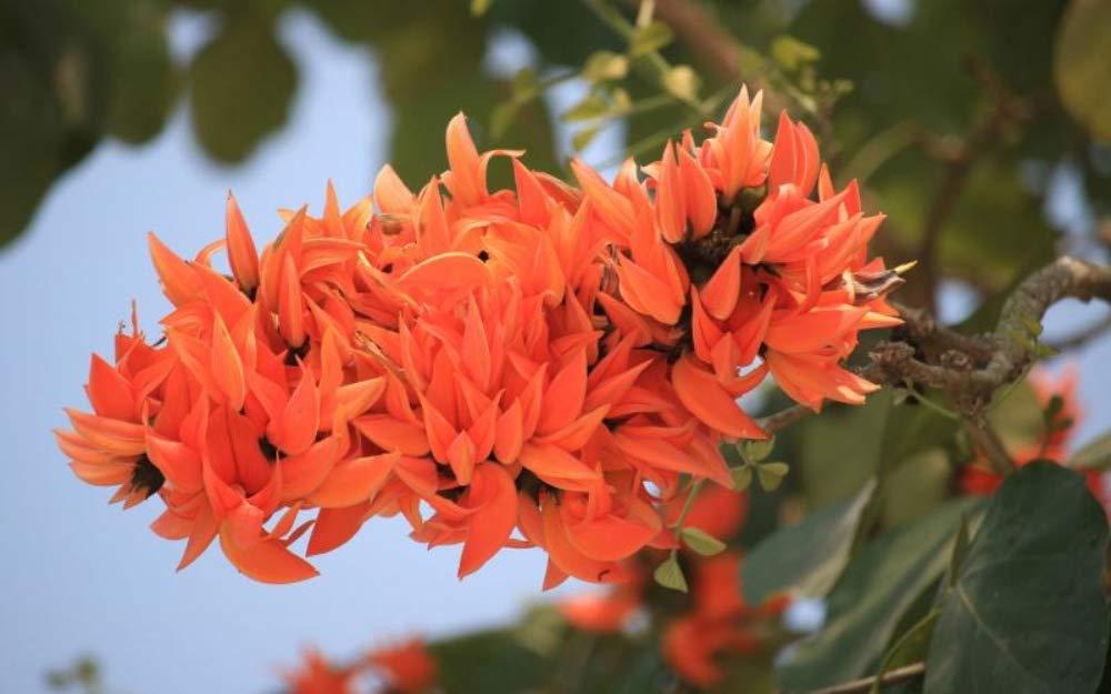 Palash 36 List of Flower फूलों के नाम