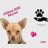 chihua DOG rescue