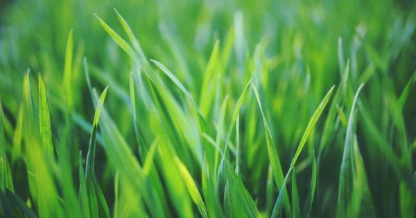 curb-appeal-grass-lawn
