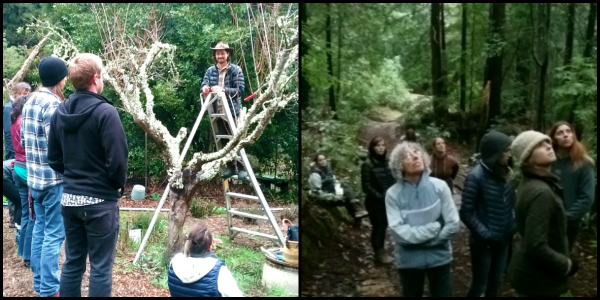 Two images: Left image shows David Shaw on an orchard ladder demonstrating winter fruit tree pruning to a group. Second image shows a group of people looking up into the trees in the forest at the NEST.
