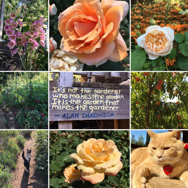 Nine images from the Chadwick Garden at UCSC, including cats, roses, flowers, and a quote by Alan Chadwick