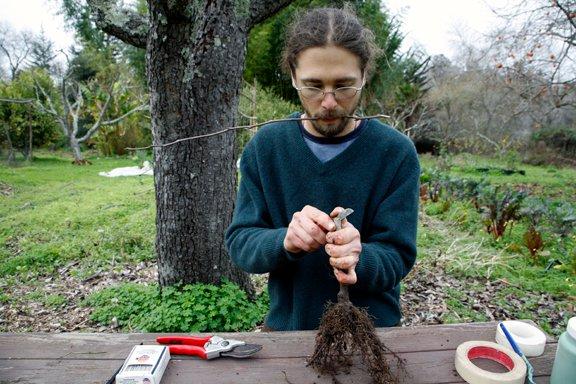 david-holding-rootstock-scion