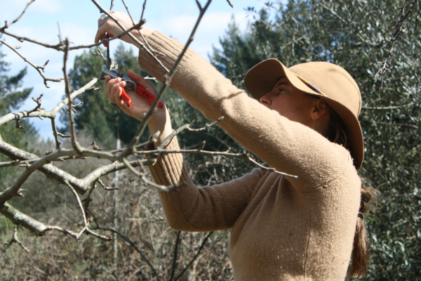 Woman in a hat holding a branch with one hand and pruning the end with hand pruners.