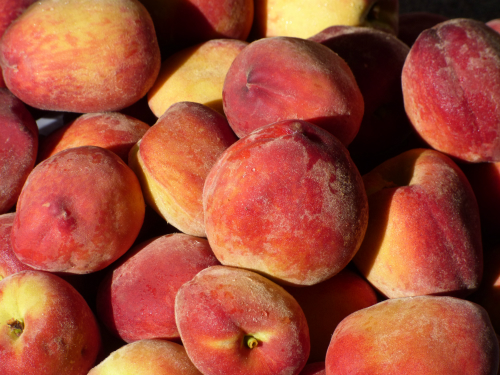 The benefits of summer pruning - delicious peaches!