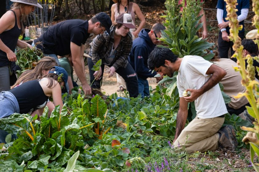 Permaculture course participants gardening in an organic garden.