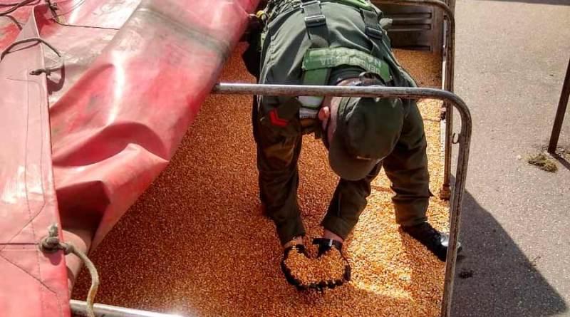 La Gendarmería incautó 240 toneladas de maíz y 30 toneladas de soja ilegales