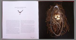Roadrunner Nest by Linda Zwick