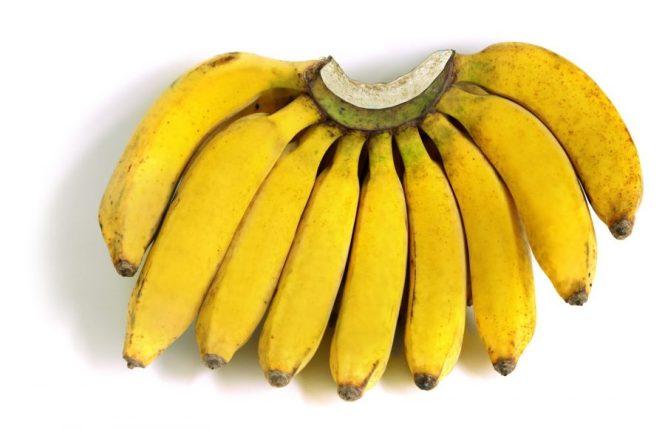 jenis jenis pisang