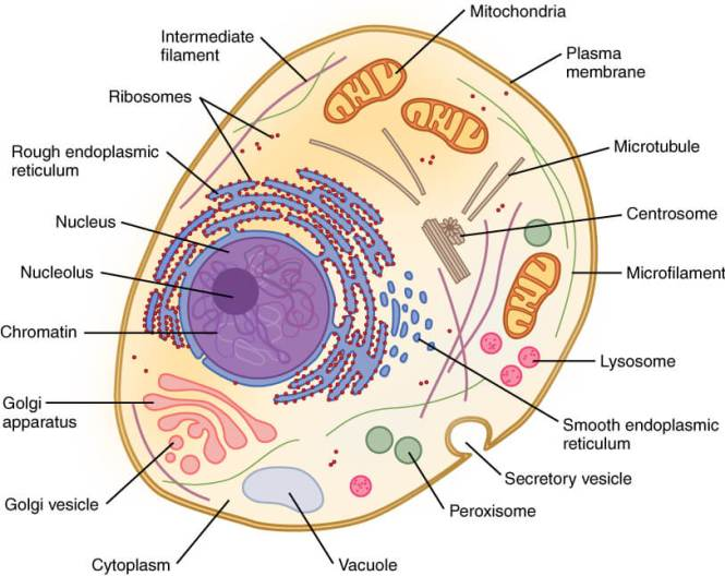 litosol