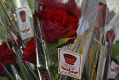 Las entidadades de Cooperación y Desarrollo con el tercer mundo han vendido rosas solidárias // Elisenda Colell