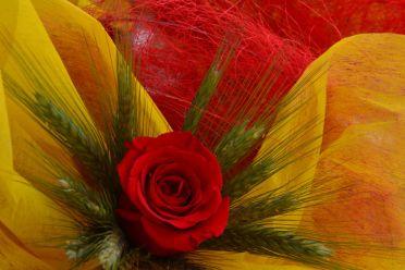 Las rosas trabajadas, las más escogidas // Elisenda Colell
