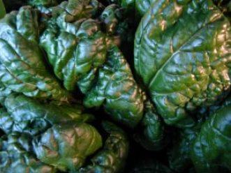 residus-pesticides-sante-enfants3