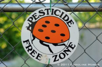 pesticides sante enfants6