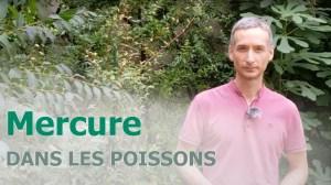 Poissons et mercure - vignette
