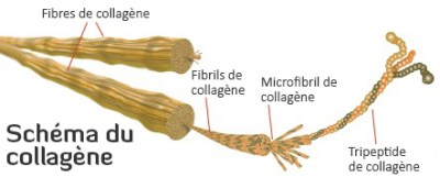 collagene