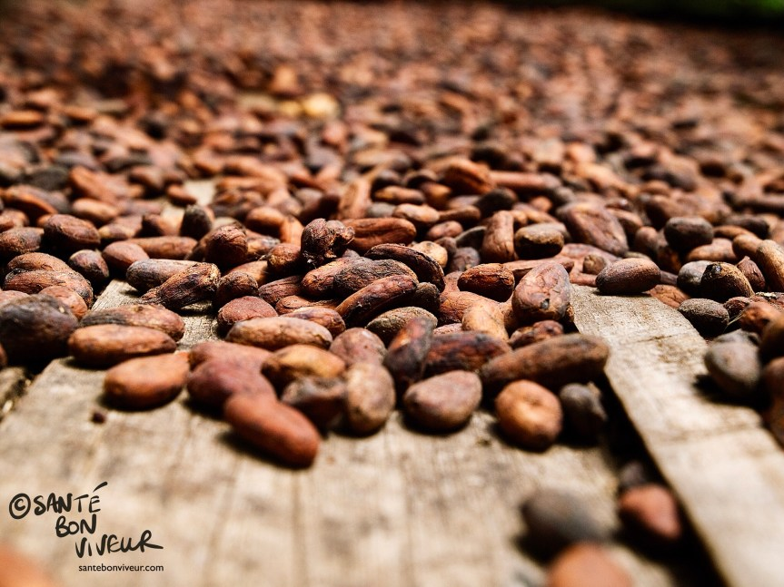 Raw Chocolate. Costa Rican cocoa beans, Chocolate Museum, Limón Province, Costa Rica,