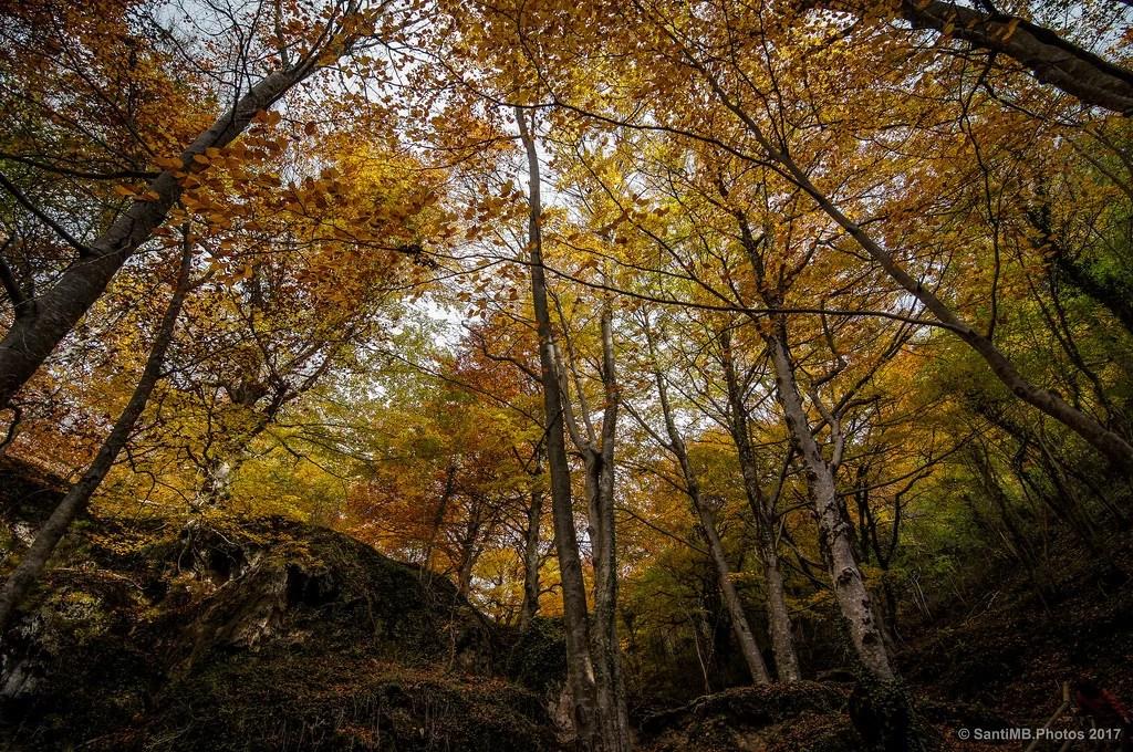 El techo del bosque