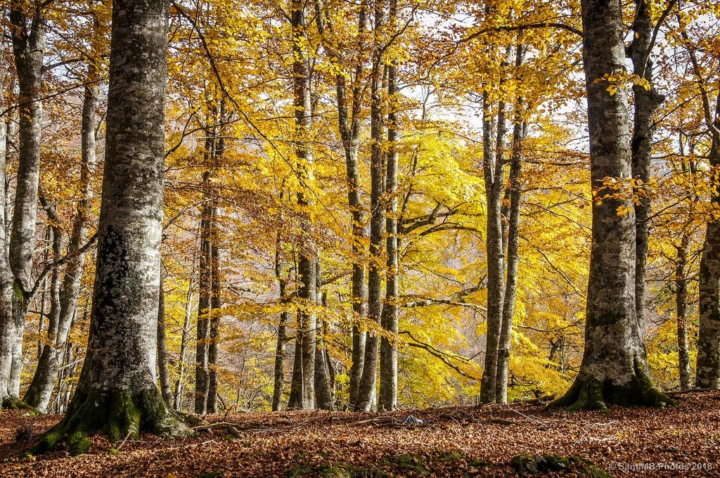 El bosque de oro
