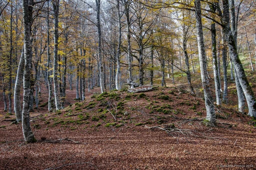 El dolmen del bosque