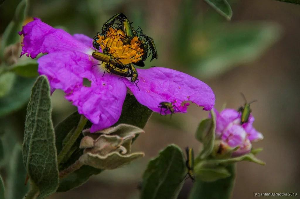 Orgía en la flor
