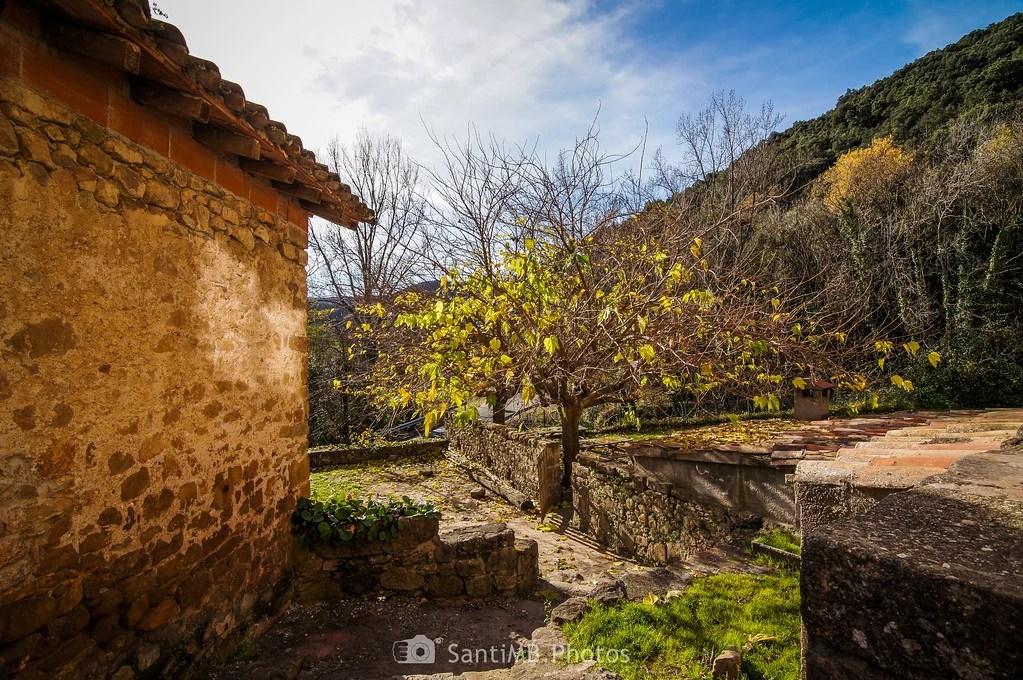 El árbol que se resistía a perder las hojas