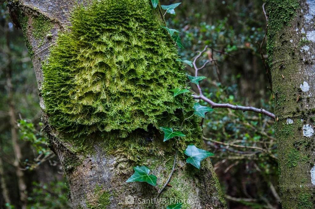 La piel del árbol