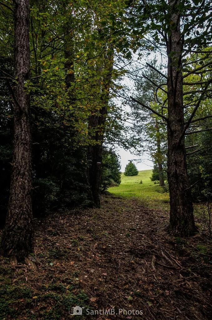 Saliendo del bosque