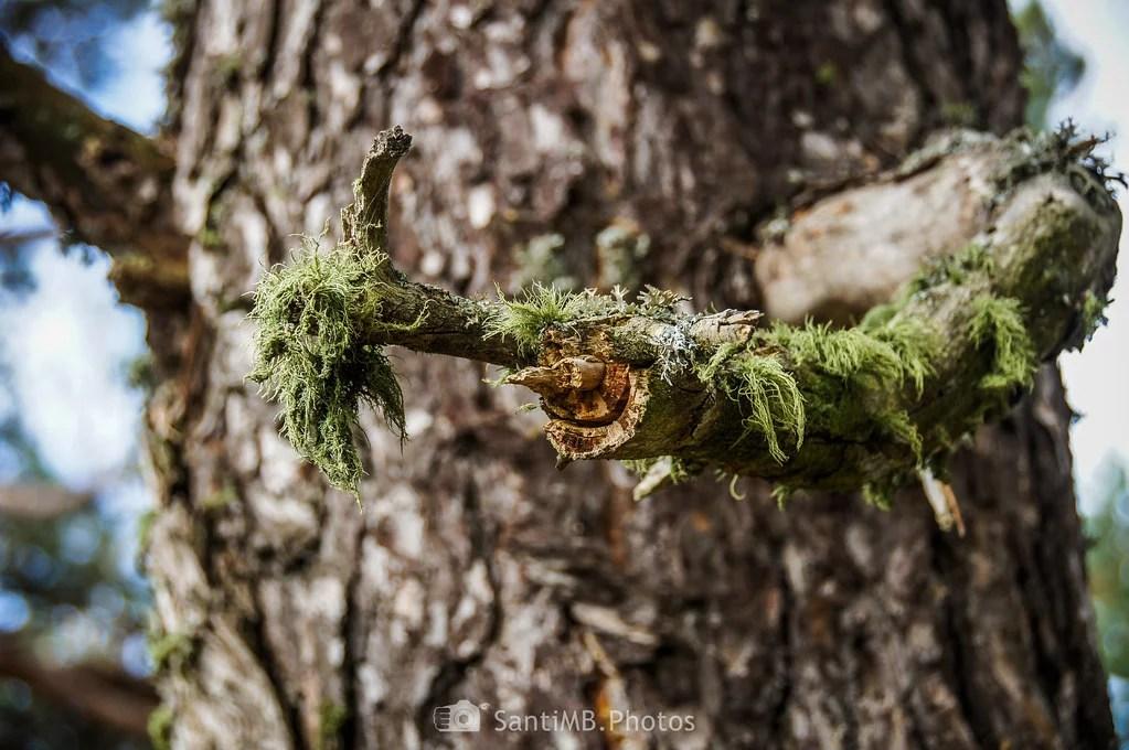 La rama contenta