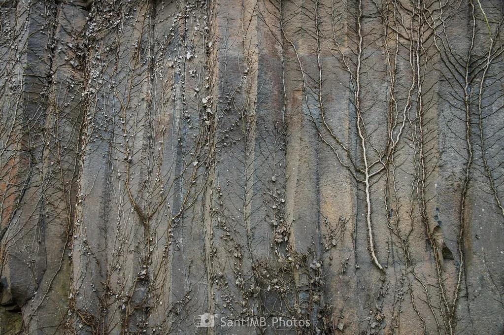 Esqueletos de hiedra