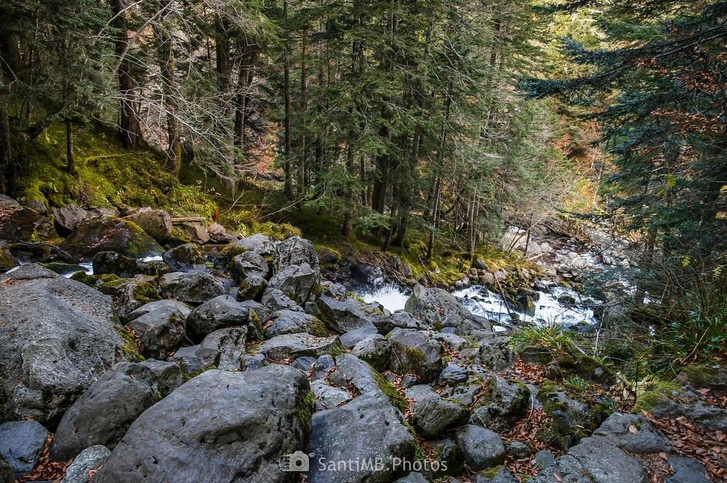 Saltando entre rocas y troncos