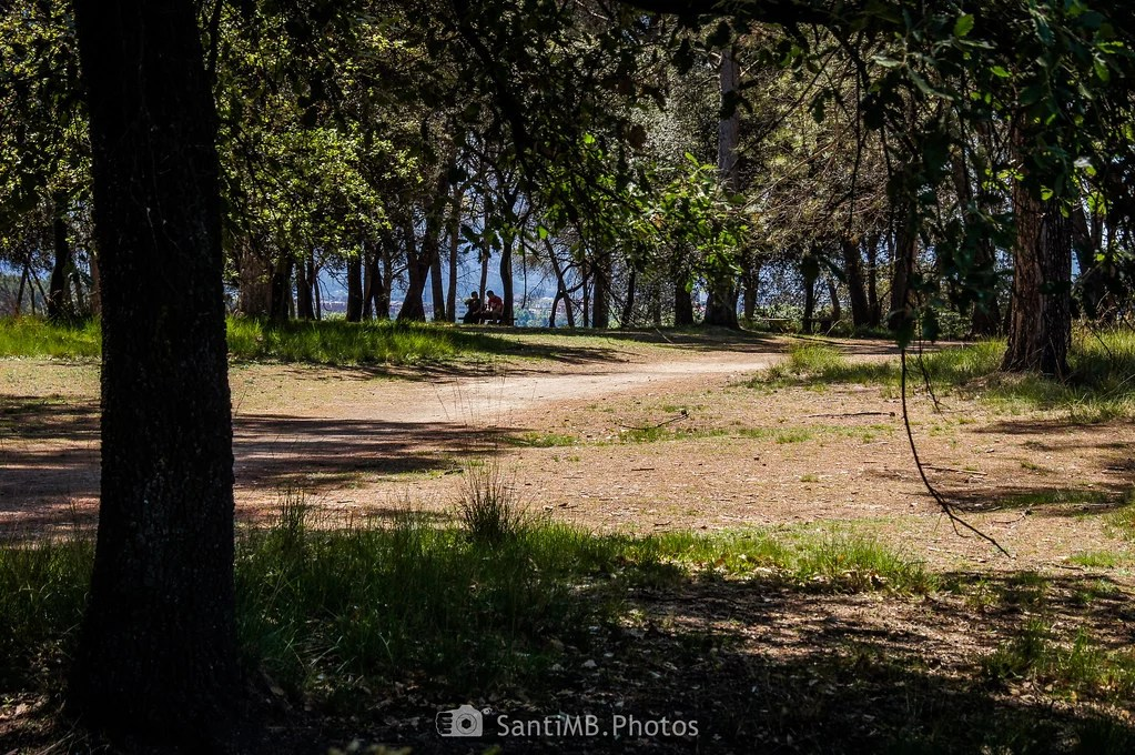 A la sombra de los pinos