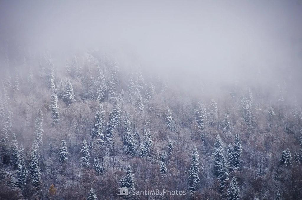 Niebla helada