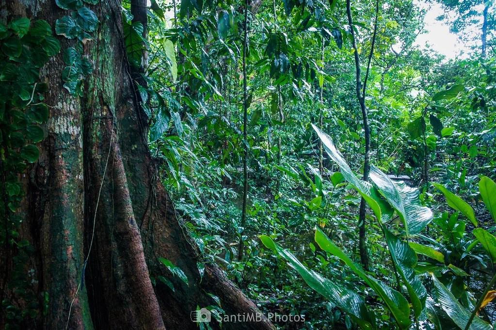 En el corazón de la selva