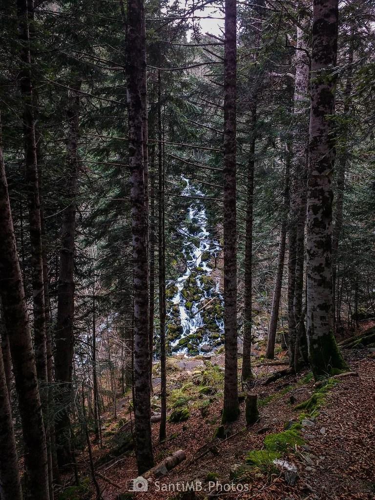 Por entre los árboles