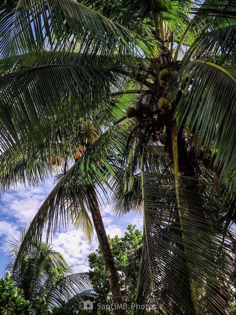 A la sombra de los cocos