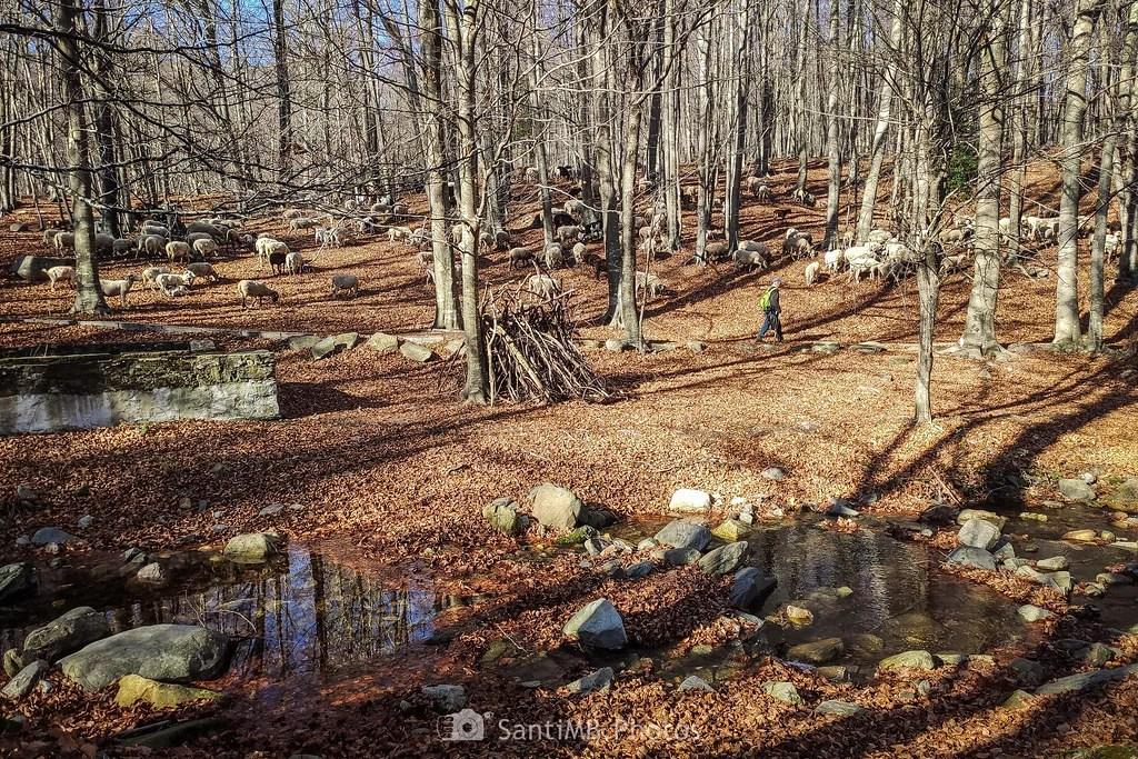 El rebaño del bosque