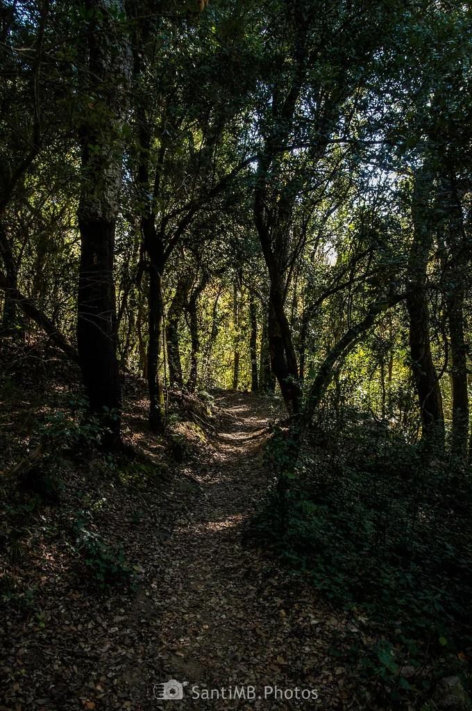 A través del bosque