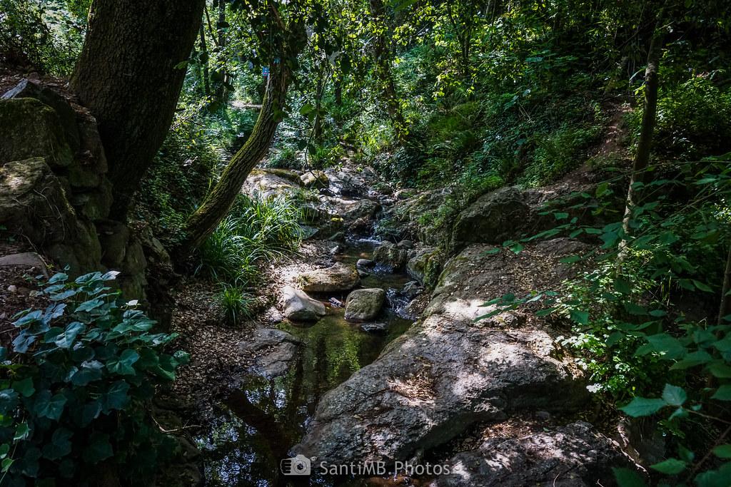Un trocito de selva