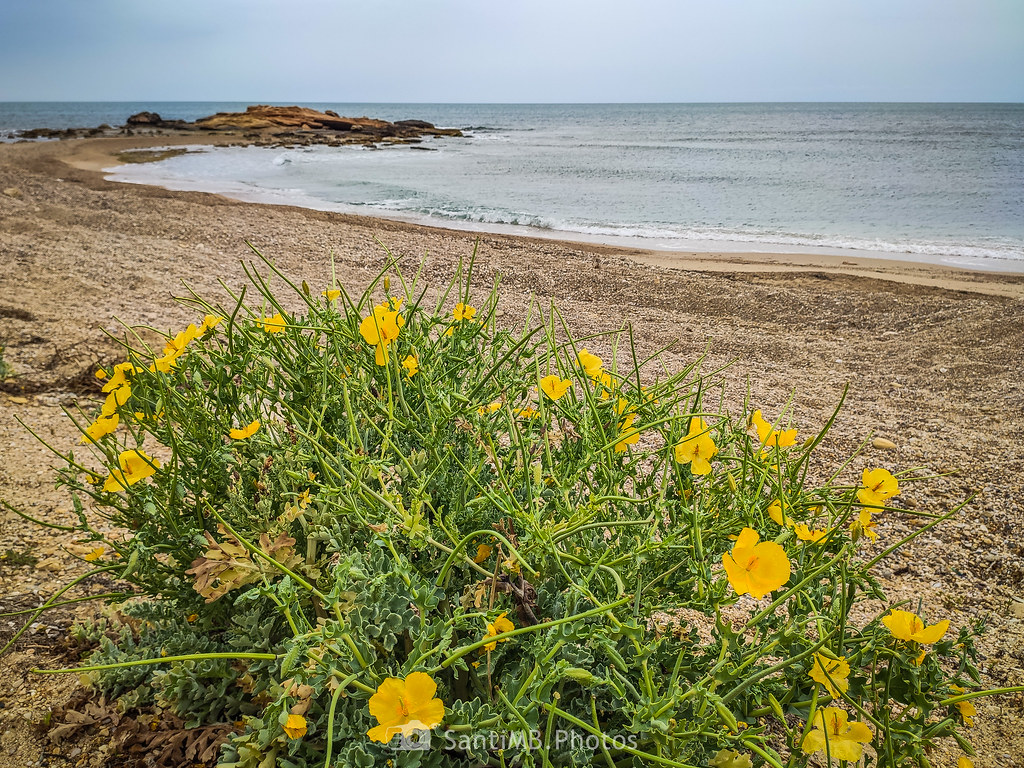 Flora de playa
