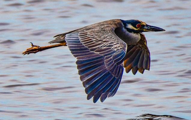 Martha Huard - Flight