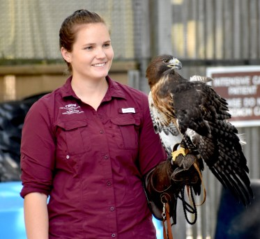 Morgan Hester, wildlife rehabilitator, with Animal Ambassador Talon, a red-tailed hawk.