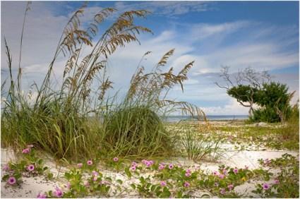 Coastal dunes RJWiley