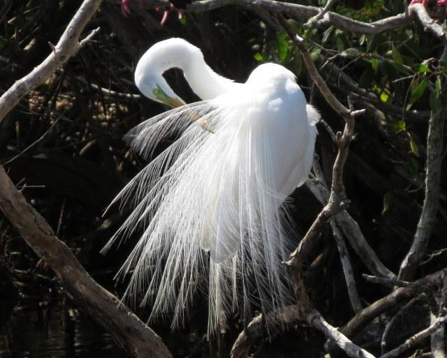 SanCap Audubon Presents 'Florida Reflections'
