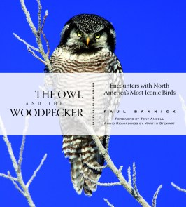 Owl&Woodpecker cover (1)