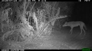 photo from City of Sanibel night vision cameras