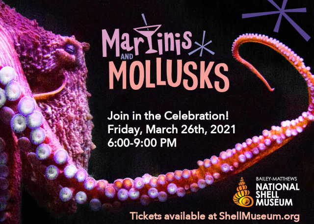 National Shell Museum Hosting Martinis and Mollusks Celebration
