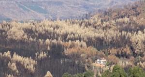 A desolação nas terras de Pedrógão Grande, novembro 2017, MSA