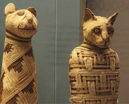 A domesticação dos gatos terá começado há cerca de 9.000 anos, no Próximo Oriente e depois no Egito. Os gatos seguiram os humanos por toda a parte, desde as férteis planícies do Egito, até aos barcos dos vikings. Múmias egípcias no Bristish Museum, foto Mario Sánchez, 2010, commons.wikimedia.org.
