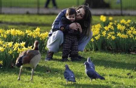Uma mulher e uma criança observam um ganso num jardim de narcisos, em St James Park, Londres, Grã-Bretanha, 12 de fevereiro de 2020. EPA / WILL OLIVER